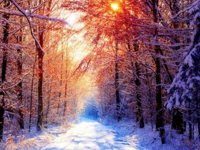 Зима в лесу утром