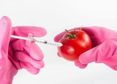 Делают в перчатках укол в помидор